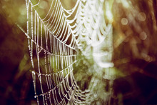 Spiderweb In The Forest