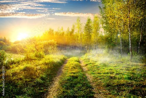 mgla-w-brzozowym-gaju