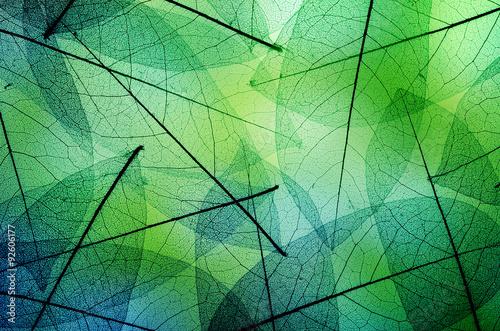 In de dag Macrofotografie Macro leaves background texture