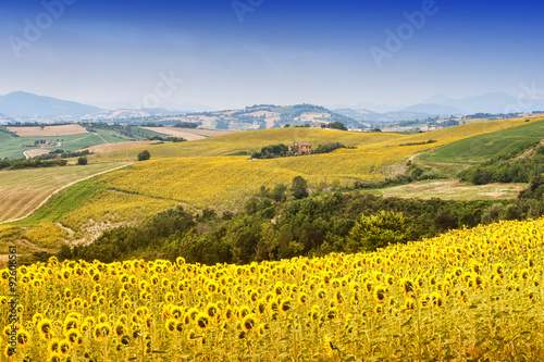 Poster Jaune Marches (Italy): summer landscape