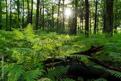 Fotobehang Bossen forest