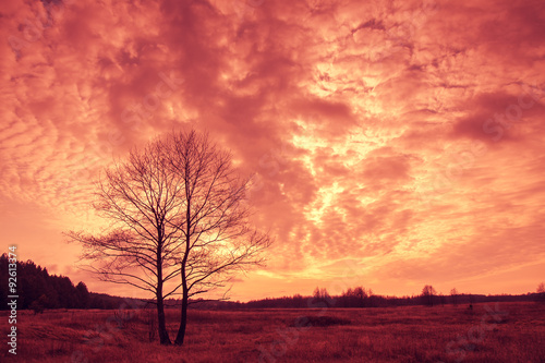Spoed Foto op Canvas Koraal Beautiful sunset over field with tree