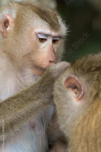 In de dag The monkey