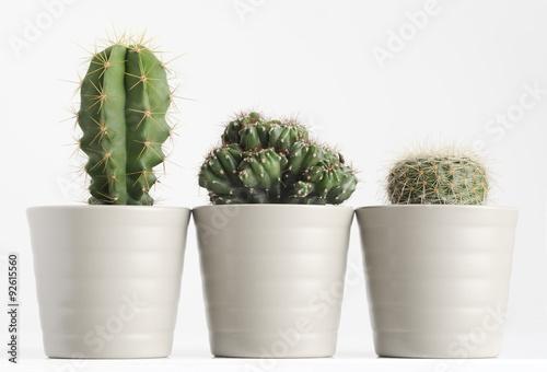 Foto op Canvas Cactus cactus on white