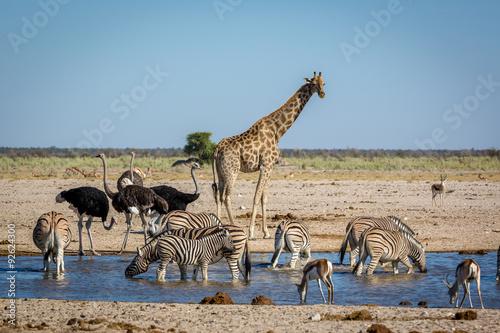 animails-wedrujacy-po-parku-narodowym-etosha-w-namibii-w-afryce-poludniowej