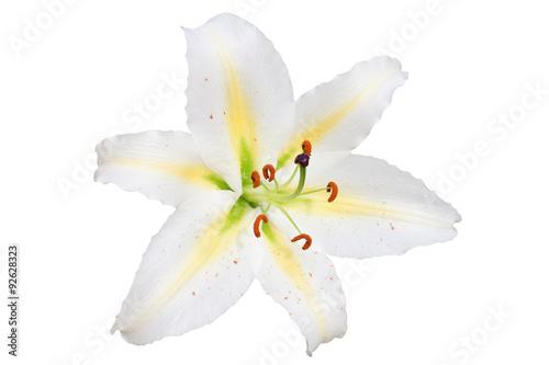Fotografia white lily on white background