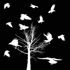 Fototapetawhite bare tree and crows silhouettes isolated on black