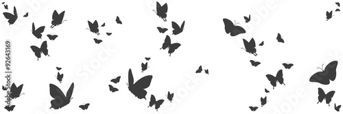 Cuadros en Lienzo  Silhouetten von Schmetterlingen