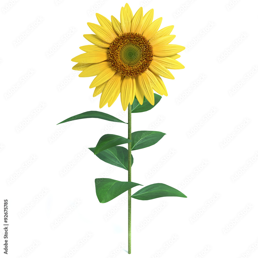 3d illustration of a sunflower