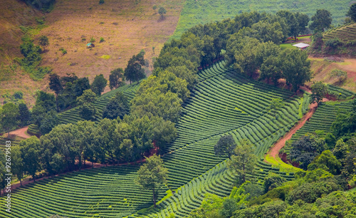 Recess Fitting Rice fields Aerial view of tea plantation landscape