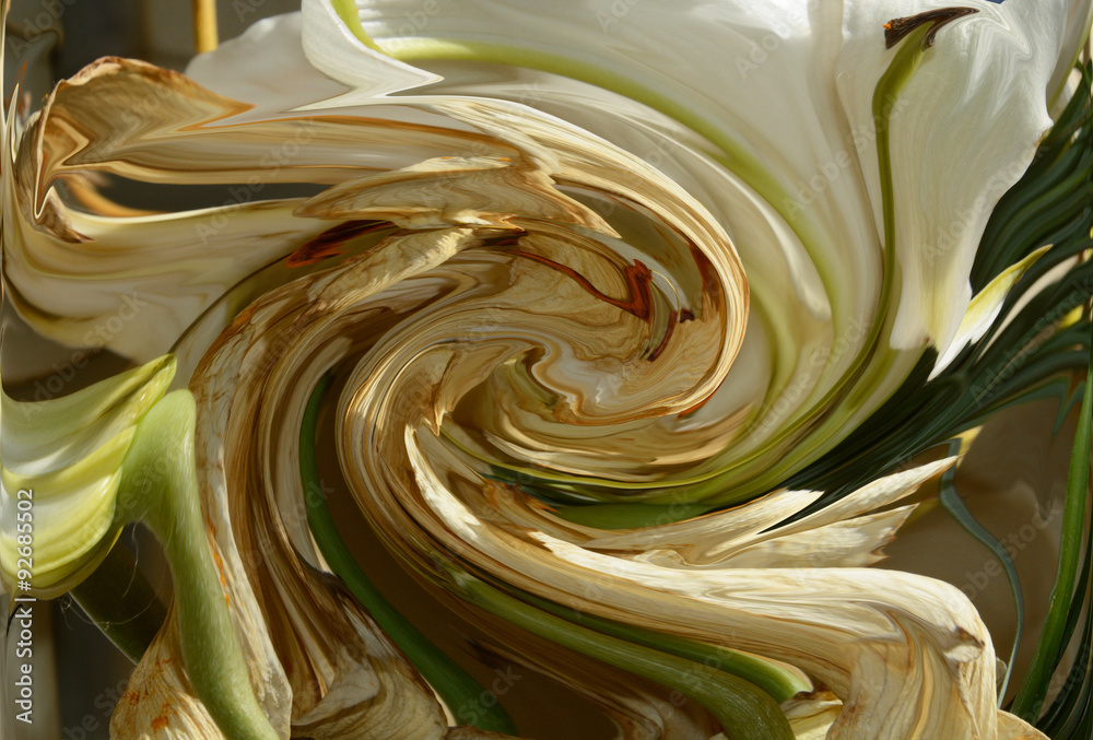 Fading White Lily spiral abstract
