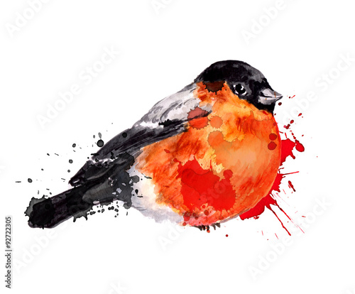 Watercolor winter bird - bullfinch Canvas Print