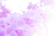 Flowers Background Blur