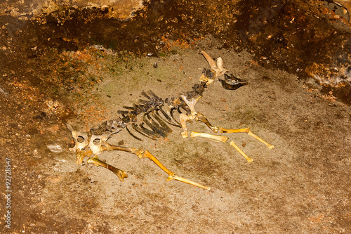 Skeleton of animal in the cave.