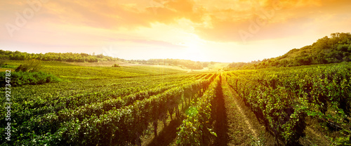 Deurstickers Platteland landscape of vineyard