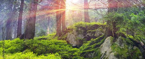 Foto auf Gartenposter Wald Misty thicket