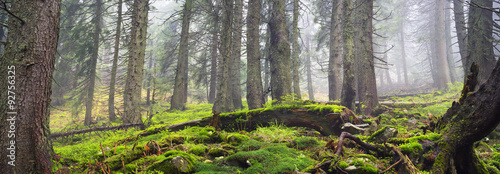 Fotobehang Bossen Misty thicket