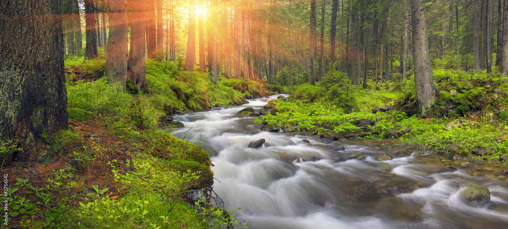 Fototapeta Prut river in the wild forest