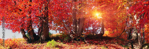 Spoed Foto op Canvas Baksteen Autumn forest in Ukraine