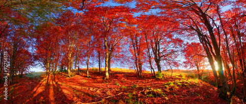 Garden Poster Brown Autumn forest in Ukraine