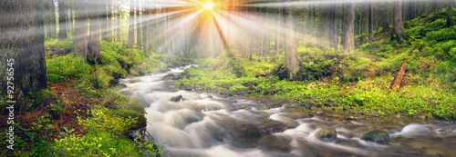 Canvas Prints Forest river Prut river in the wild forest
