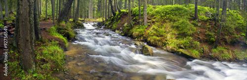 prut-rzeka-w-dzikim-lesie
