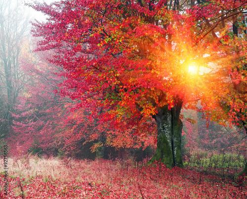 Deurstickers Herfst autumn mist