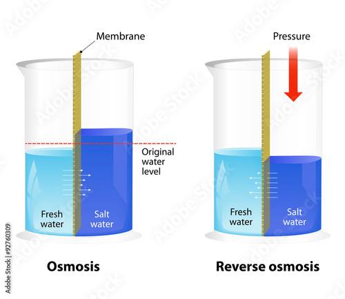 Fotografía  Osmosis and Reverse Osmosis