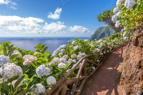 Foto op Canvas Hydrangea Coastal path with ortensia in Sao Miguel, Azores Islands