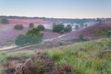 piękny mglisty poranek na wzgórzach z kwiatami wrzosu - 92774370