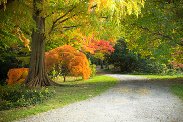 Colorful autumn foliage in nature landscape