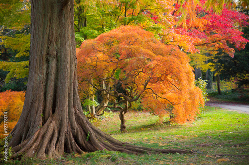 Poster Bomen Colorful autumn foliage in nature landscape
