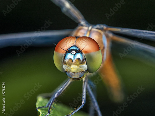 Photo  Dragonfly / Dragonfly
