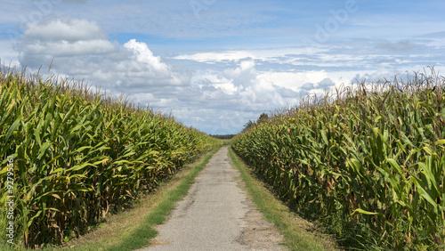 Photo Country landscape near Morimondo (Milan)