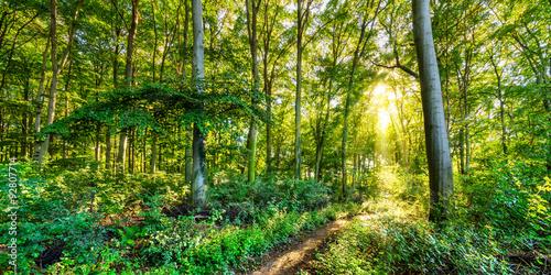 Photo Stands Road in forest Herbstlicher Wald mit goldener Sonne