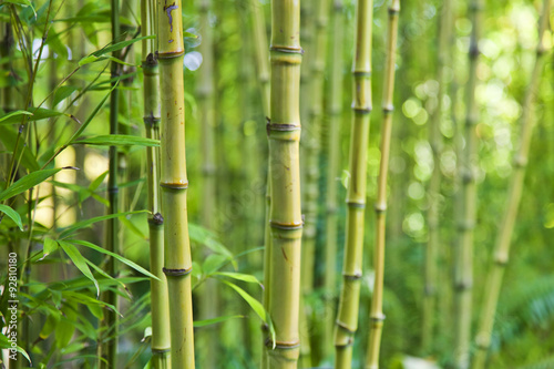 Foto auf Gartenposter Bambusse Green bamboo nature backgrounds