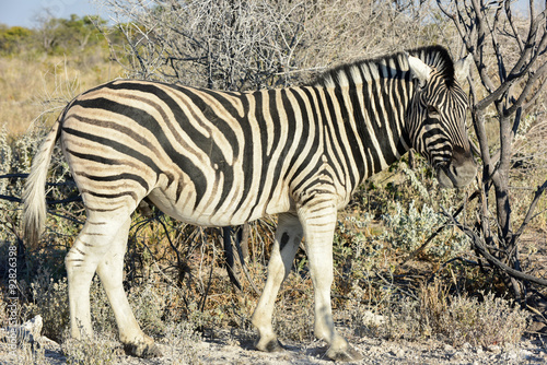 Papiers peints Hyène Zebra - Etosha, Namibia