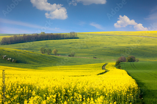 Poster Geel Panoramic landscape of colorful yellow-green hills with ground