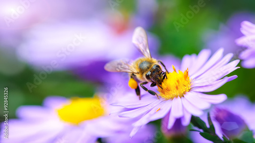 Spoed Foto op Canvas Bee Bee on the flower