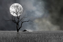 Super Moon And Barren Tree Wit...