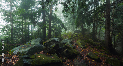 Poster Forets fog in forest