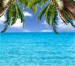 image of sea sky coconut tree