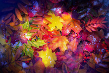 Colorful Autumn Leaves Backgro...
