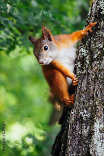Photo squirrel on a tree, green bokeh background