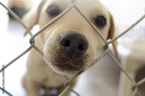Photo Shelter Dog