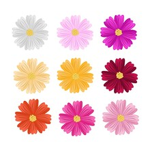 9 Assorted Cosmos Flowers On White Background