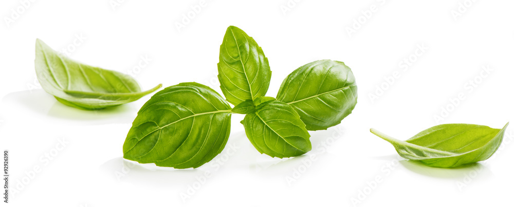 Fototapety, obrazy: Green leaves of basil