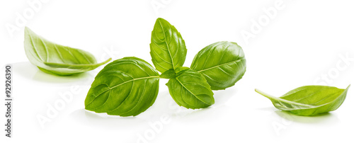 Stampa su Tela Green leaves of basil