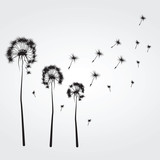 Fototapeta Dmuchawce - Background with the dandelions