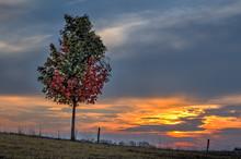Jesienny Klonowy Zmierzch